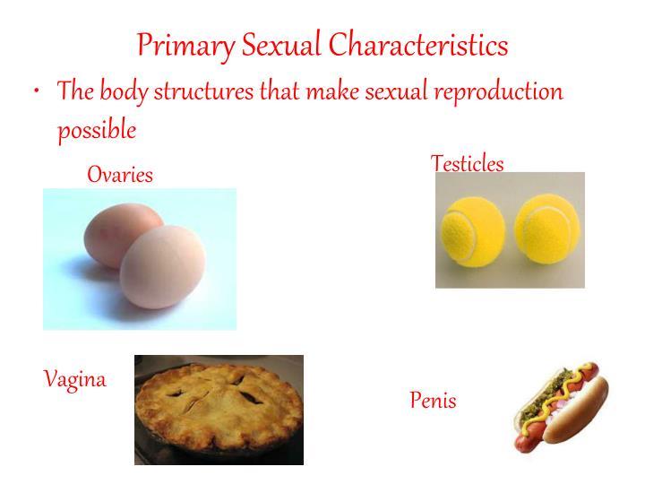 Primary Sexual Characteristics