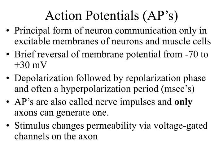 Action Potentials (AP's)