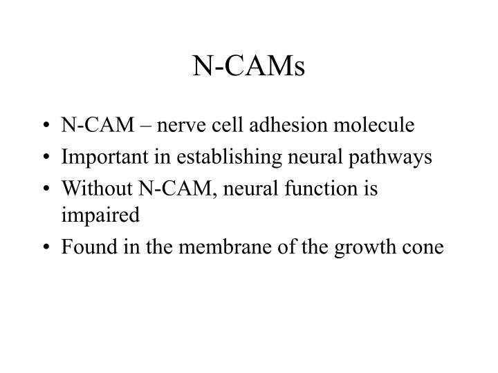 N-CAMs