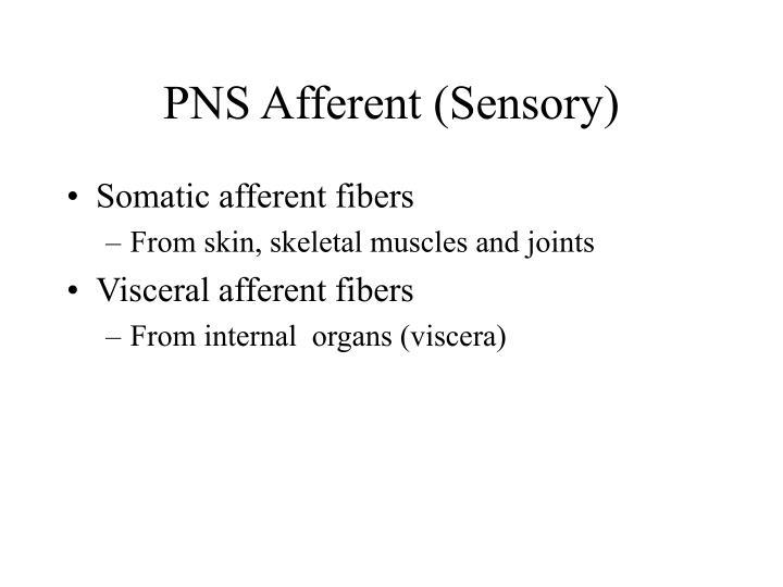 PNS Afferent (Sensory)