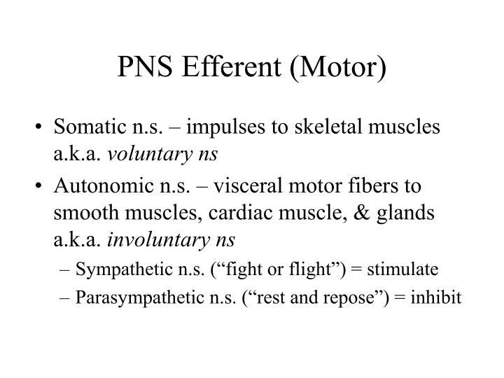 PNS Efferent (Motor)