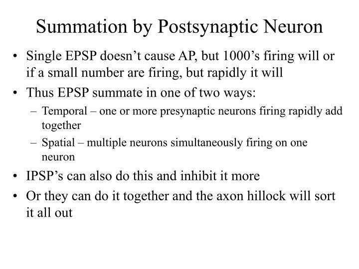 Summation by Postsynaptic Neuron