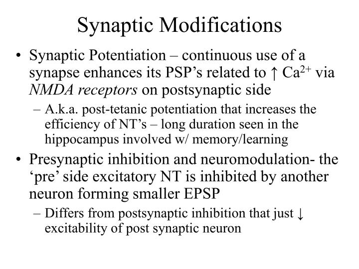 Synaptic Modifications