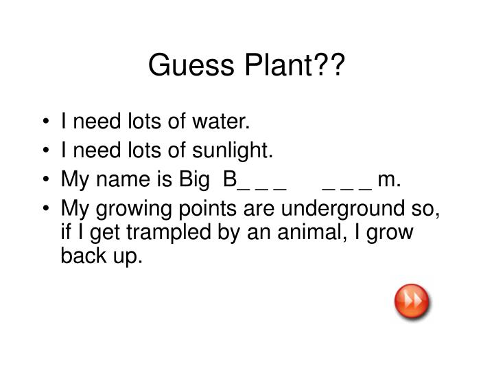 Guess Plant??