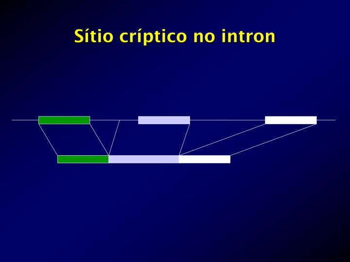 Sítio críptico no intron
