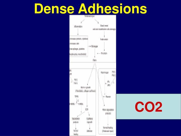 Dense Adhesions