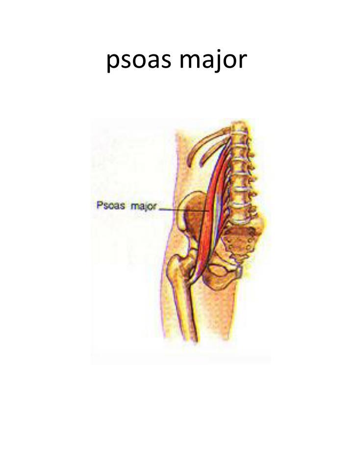 psoas major