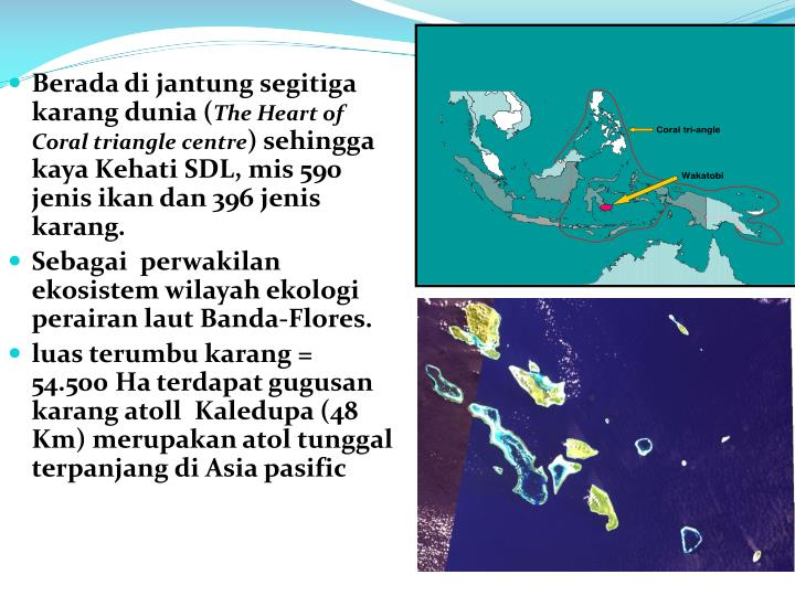 Berada di jantung segitiga karang dunia (