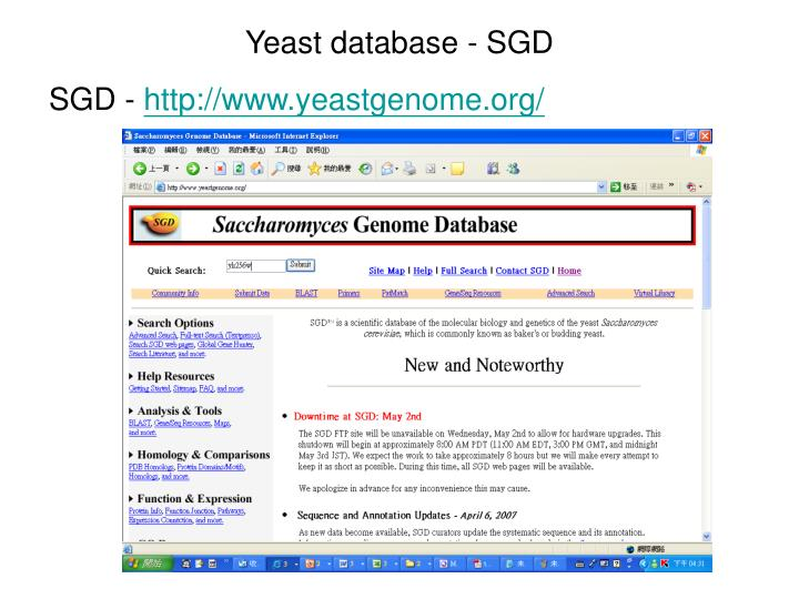 Yeast database - SGD