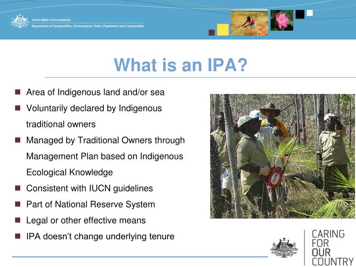 What is an IPA?