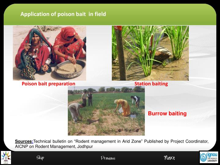 Application of poison bait  in field