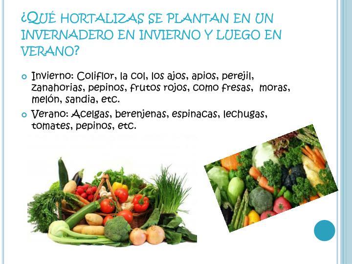 ¿Qué hortalizas se plantan en un invernadero en invierno y luego en verano?