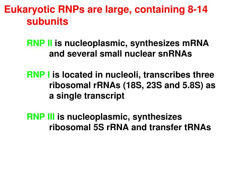 Eukaryotic RNPs are large, containing 8-14 	subunits