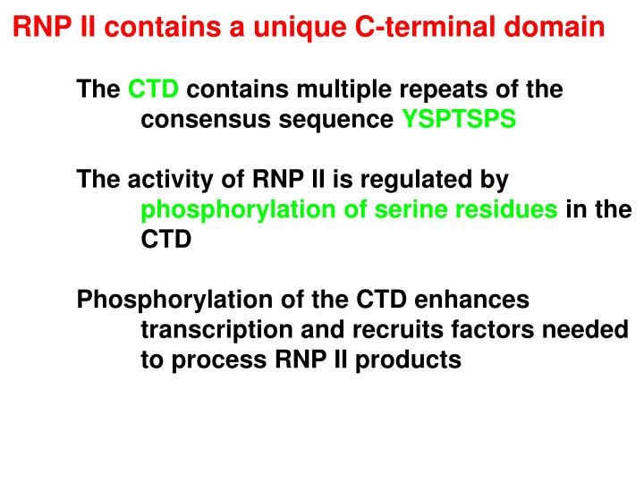 RNP II contains a unique C-terminal domain