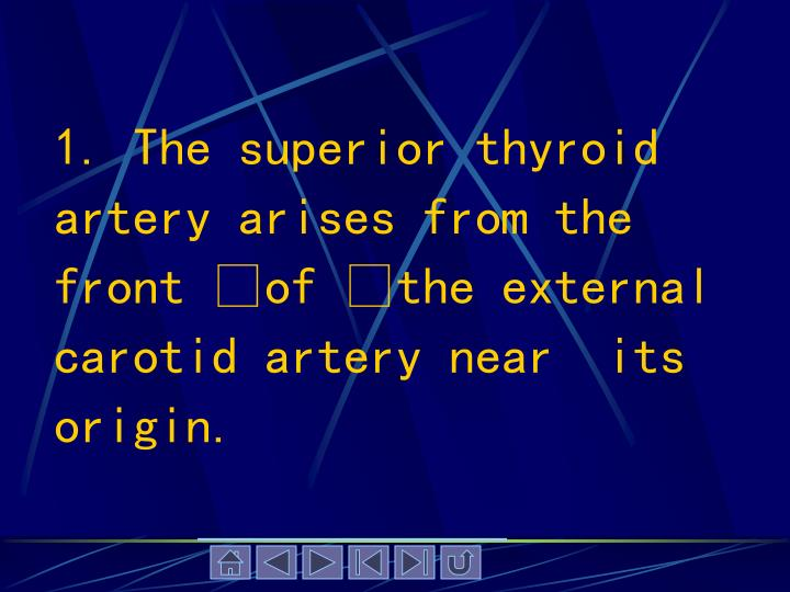1. The superior thyroid artery arises from the front of the external carotid artery near  its origin.