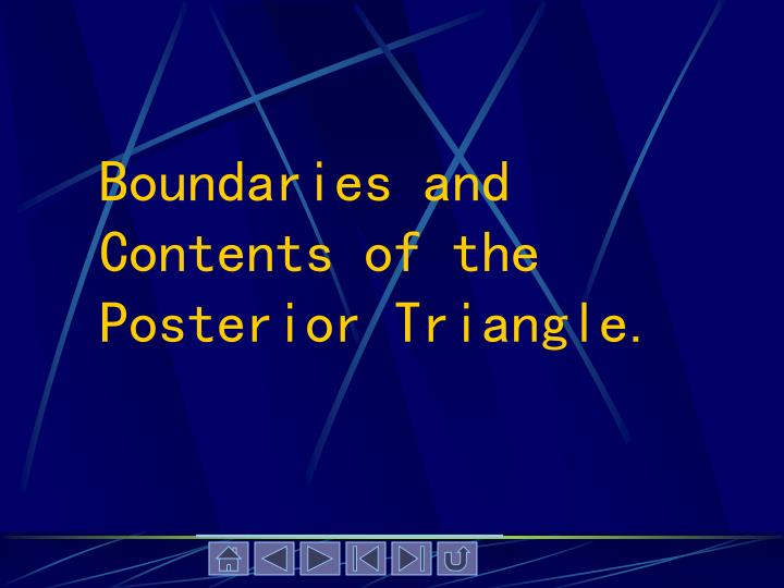 Boundaries and Contents of the Posterior Triangle.