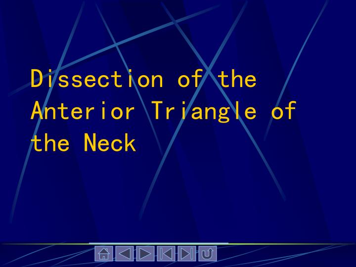 Dissection of the Anterior Triangle of the Neck