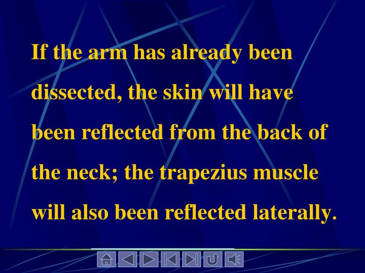 If the arm has already been dissected, the skin will have been reflected from the back of the neck; the trapezius muscle will also been reflected laterally