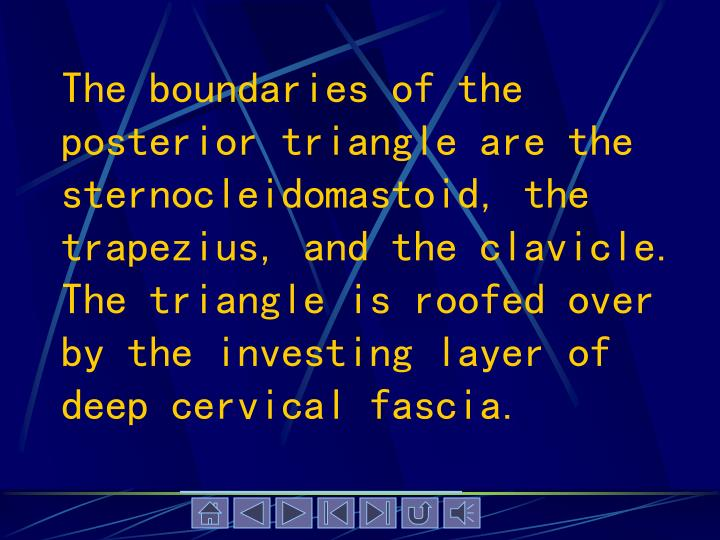The boundaries of the posterior triangle are the sternocleidomastoid, the trapezius, and the clavicle. The triangle is roofed over by the investing layer of deep cervical fascia.