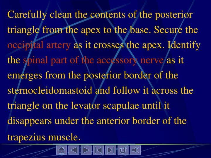 Carefully clean the contents of the posterior triangle from the apex to the base. Secure the