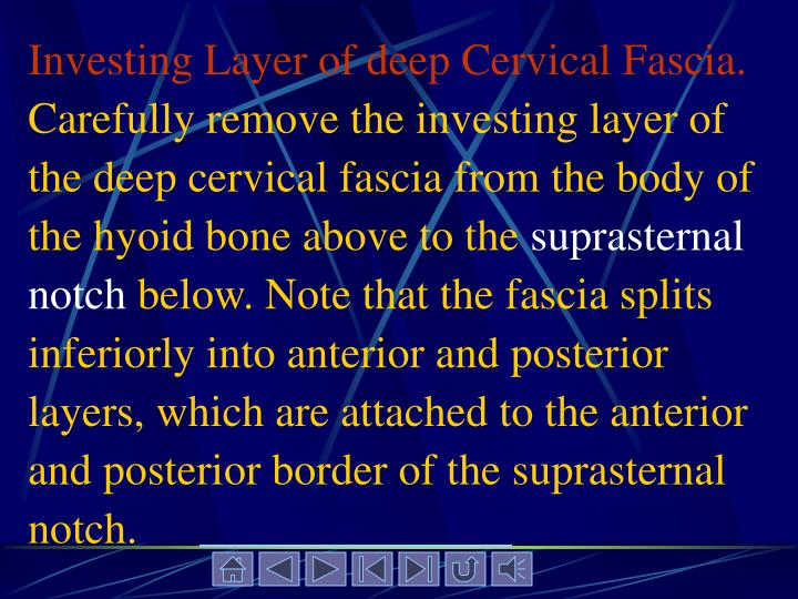 Investing Layer of deep Cervical Fascia.