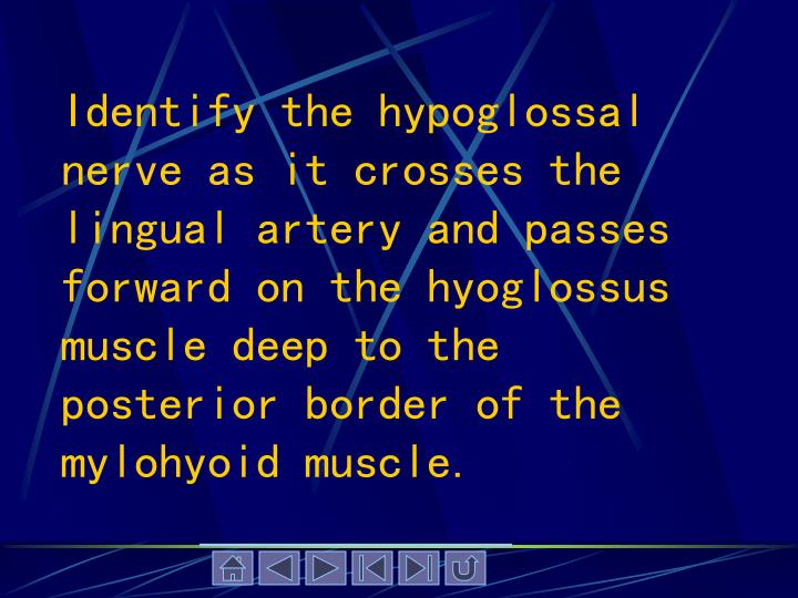 Identify the hypoglossal nerve as it crosses the lingual artery and passes forward on the hyoglossus muscle deep to the posterior border of the mylohyoid muscle.