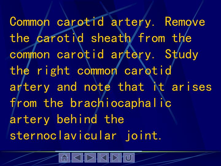 Common carotid artery. Remove the carotid sheath from the common carotid artery. Study the right common carotid artery and note that it arises from the brachiocaphalic artery behind the sternoclavicular joint.
