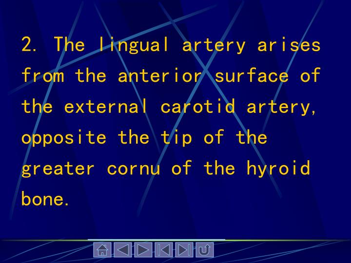 2. The lingual artery arises from the anterior surface of the external carotid artery, opposite the tip of the greater cornu of the hyroid bone.