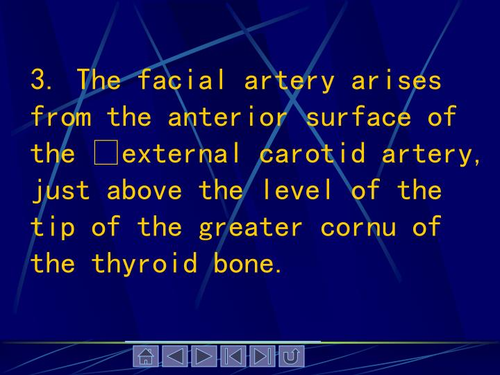 3. The facial artery arises from the anterior surface of the external carotid artery, just above the level of the tip of the greater cornu of the thyroid bone.