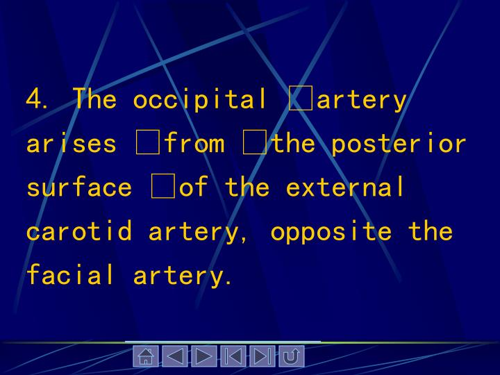 4. The occipital artery arises from the posterior surface of the external carotid artery, opposite the facial artery.