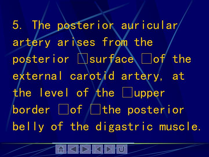 5. The posterior auricular artery arises from the posterior surface of the external carotid artery, at the level of the upper border of the posterior belly of the digastric muscle.