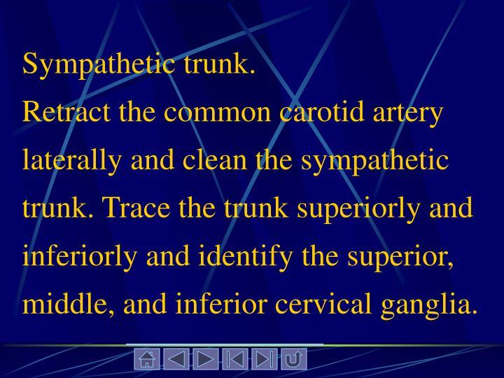 Sympathetic trunk.