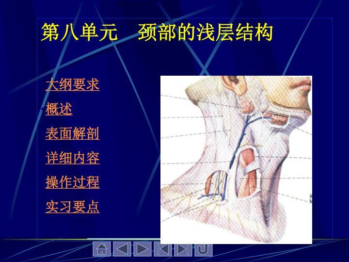 第八单元    颈部的浅层结构