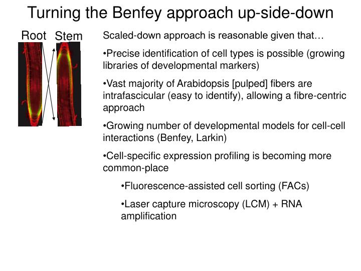 Turning the Benfey approach up-side-down