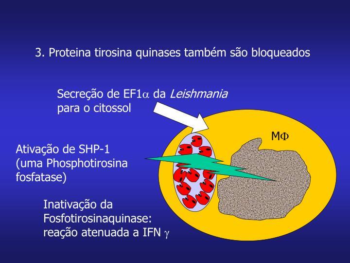 Secreção de EF1