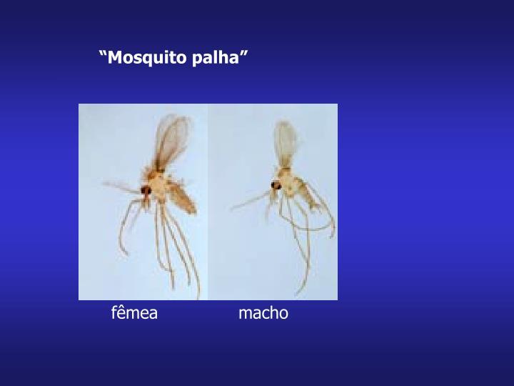 """""""Mosquito palha"""""""