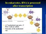 in eukaryotes rna is processed after transcription