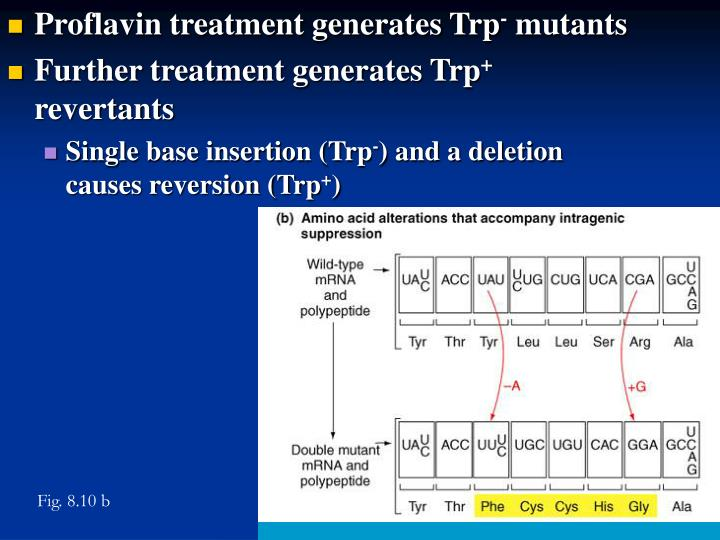 Proflavin treatment generates Trp