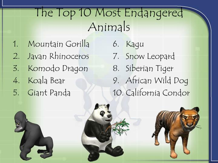 Top 10 Most Endangered Animals | www.pixshark.com - Images ...