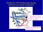mutations in gtp binding region disrupt hydrolysis and create oncoproteins