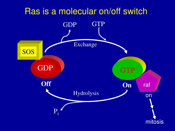 Ras is a molecular on off switch