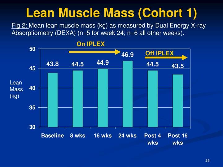Lean Muscle Mass (Cohort 1)