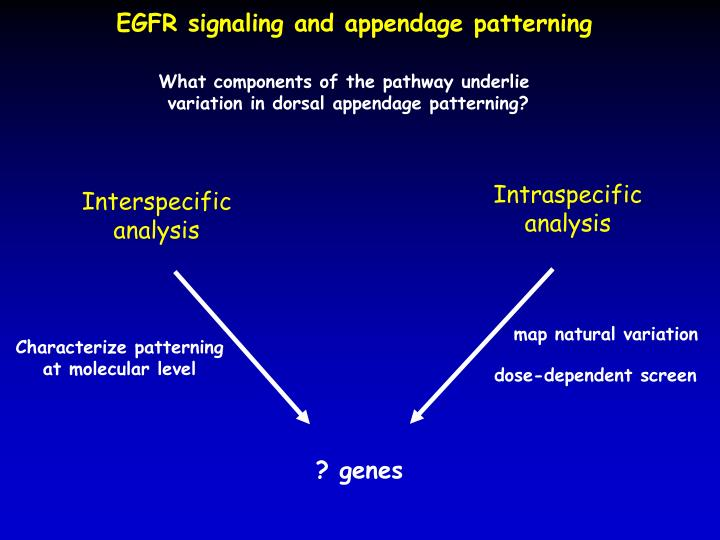EGFR signaling and appendage patterning