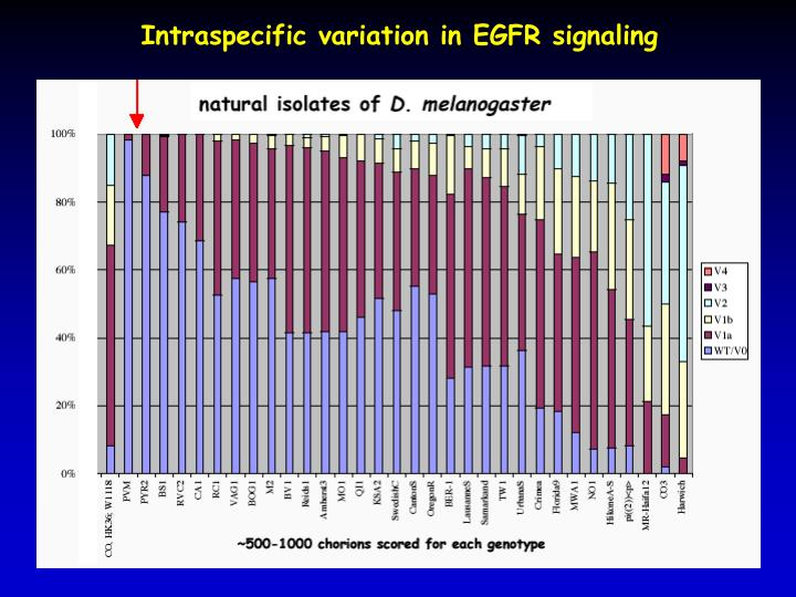 Intraspecific variation in EGFR signaling