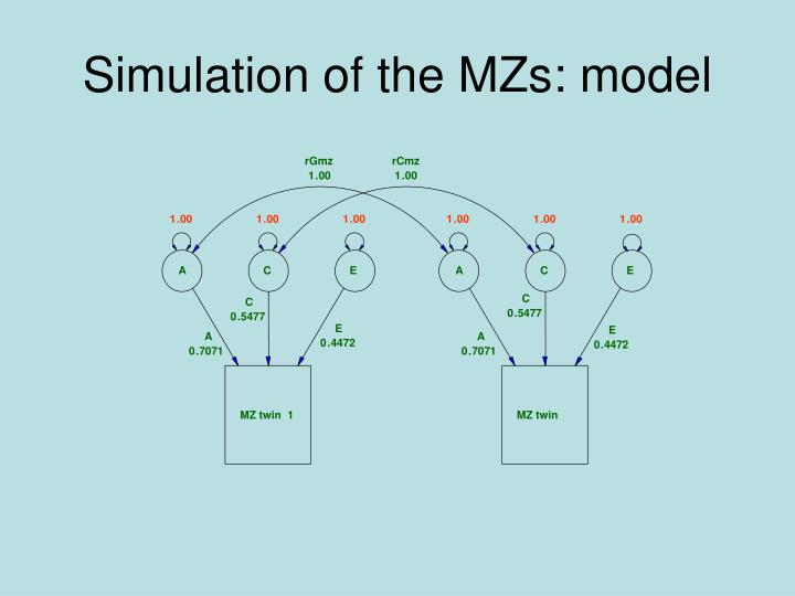 Simulation of the MZs: model