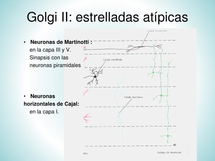 Golgi II: estrelladas atípicas