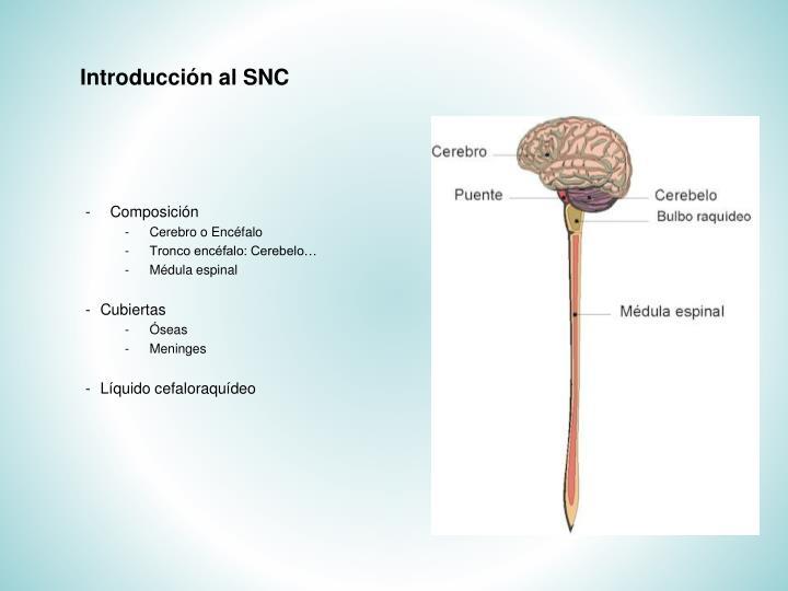 Introducción al SNC