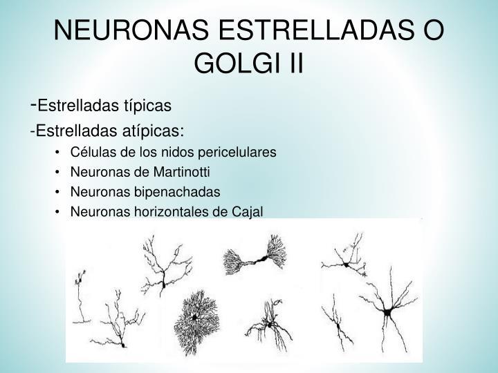NEURONAS ESTRELLADAS O GOLGI II