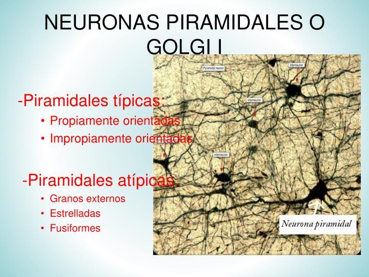 NEURONAS PIRAMIDALES O GOLGI I