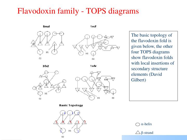 Flavodoxin family - TOPS diagrams